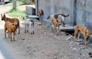 В Самаре отловят более 19 тыс. бездомных животных